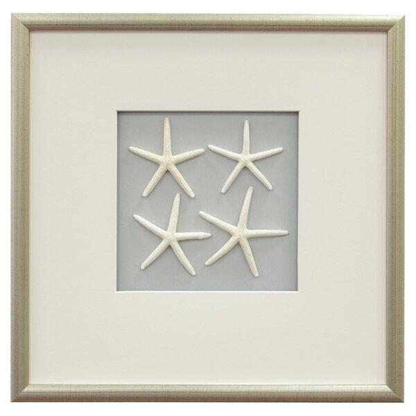 Glass Star Wall Decor : Sea star wall decor joss main