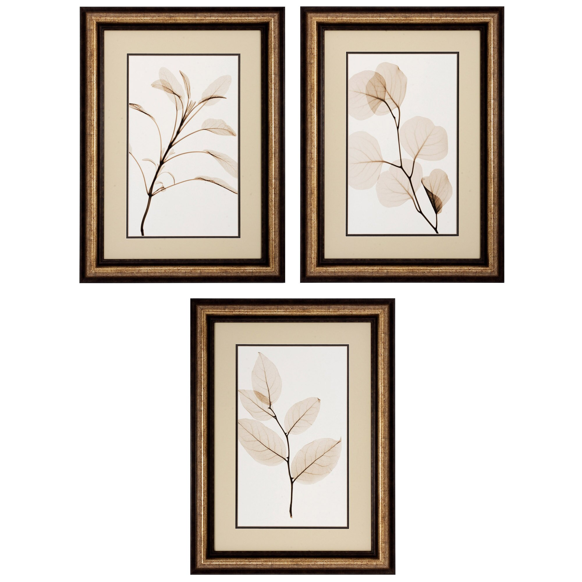 propac images sage salal eucalypt 3 piece framed graphic art set reviews wayfair. Black Bedroom Furniture Sets. Home Design Ideas