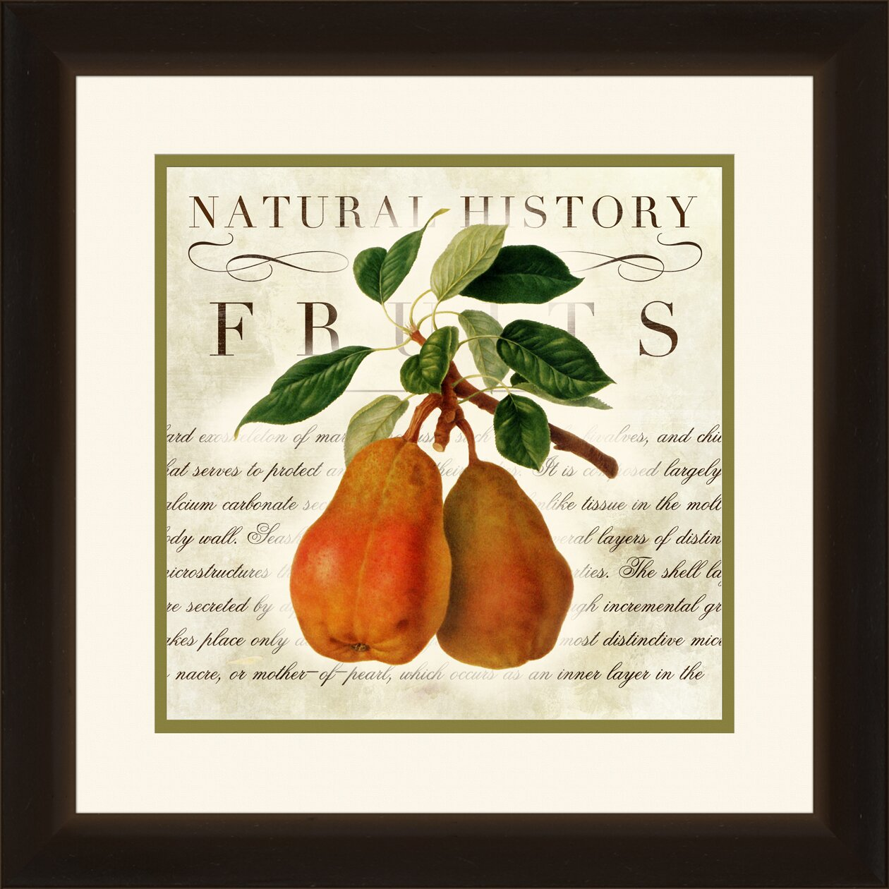 Ptm Images Natural History Fruits 2 Piece Framed Graphic