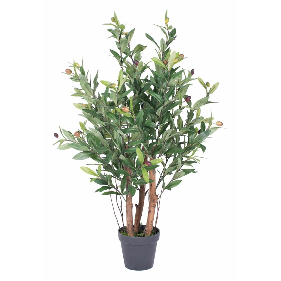 vickerman new2 olive tree in pot reviews wayfair. Black Bedroom Furniture Sets. Home Design Ideas