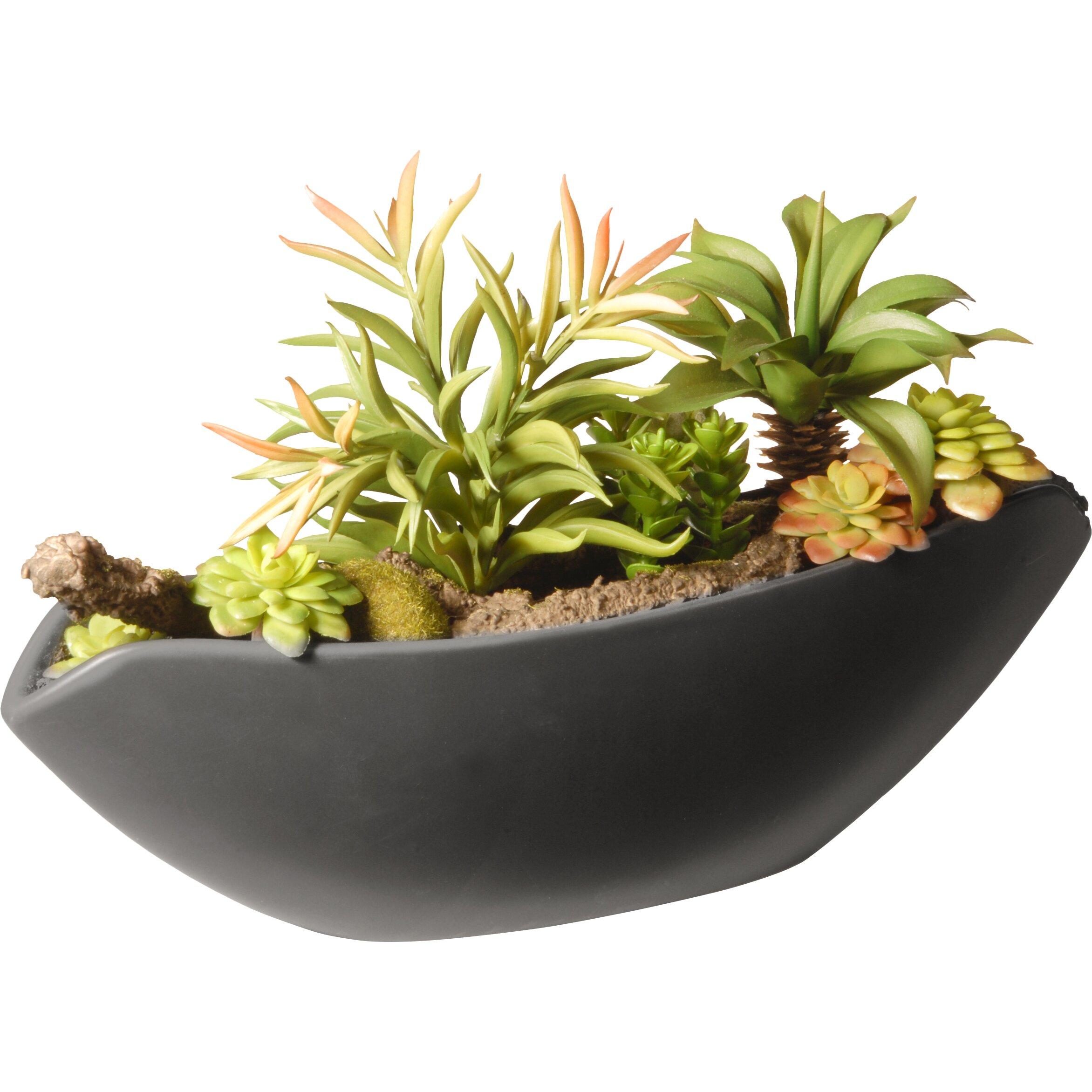 National Tree Co Succulent Desk Top Plant In Pot