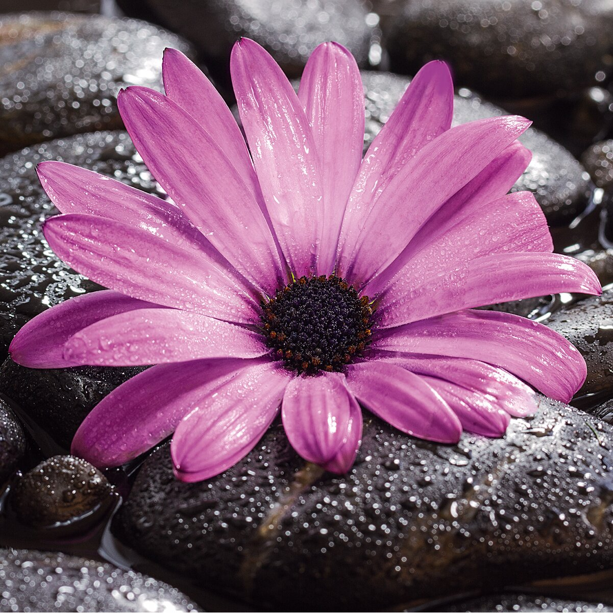 Platin art deco glass fancy flowers 2 piece photographic for Art deco flowers