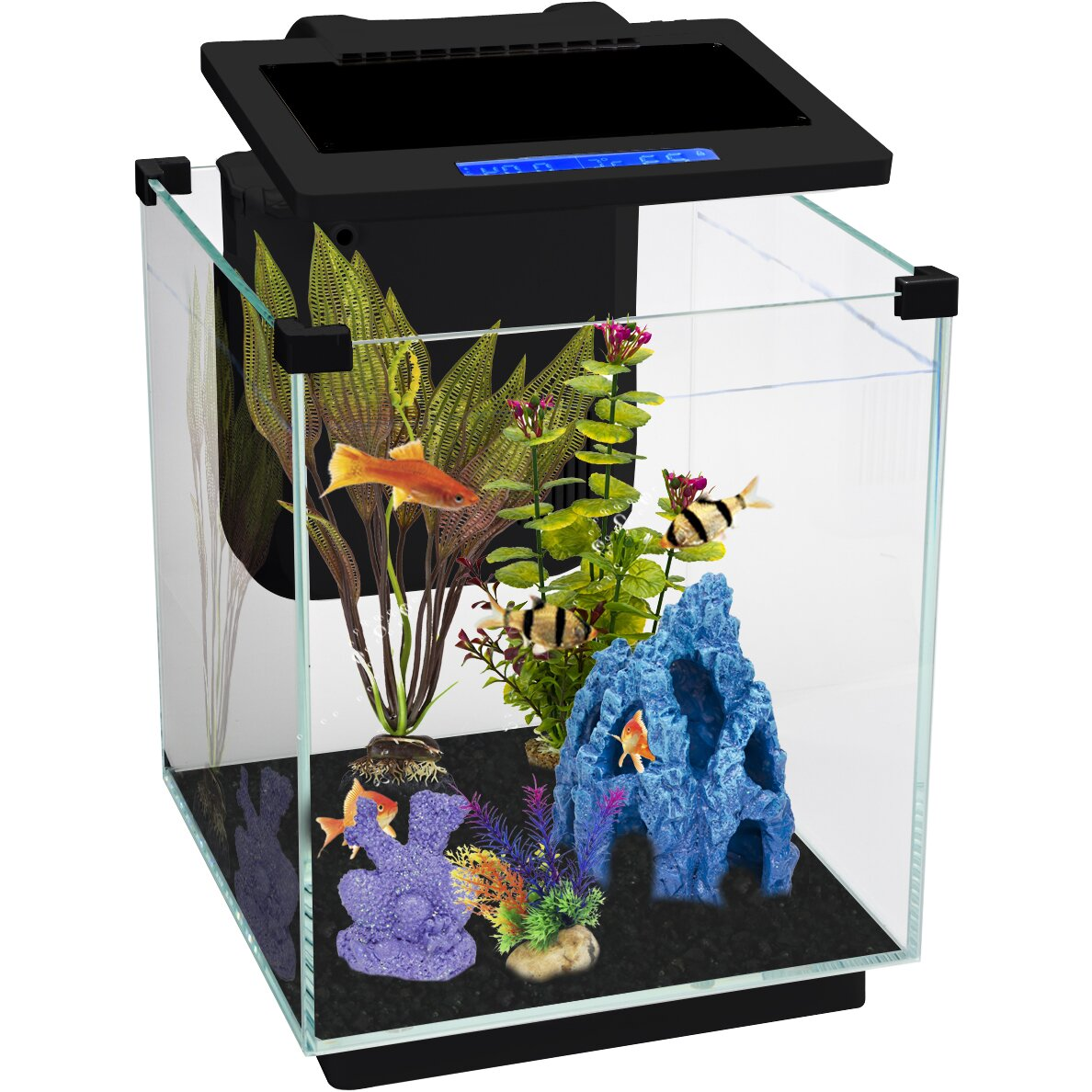 Penn plax simplicity 5 5 gallon desktop aquarium tank for 5 gallon glass fish tank