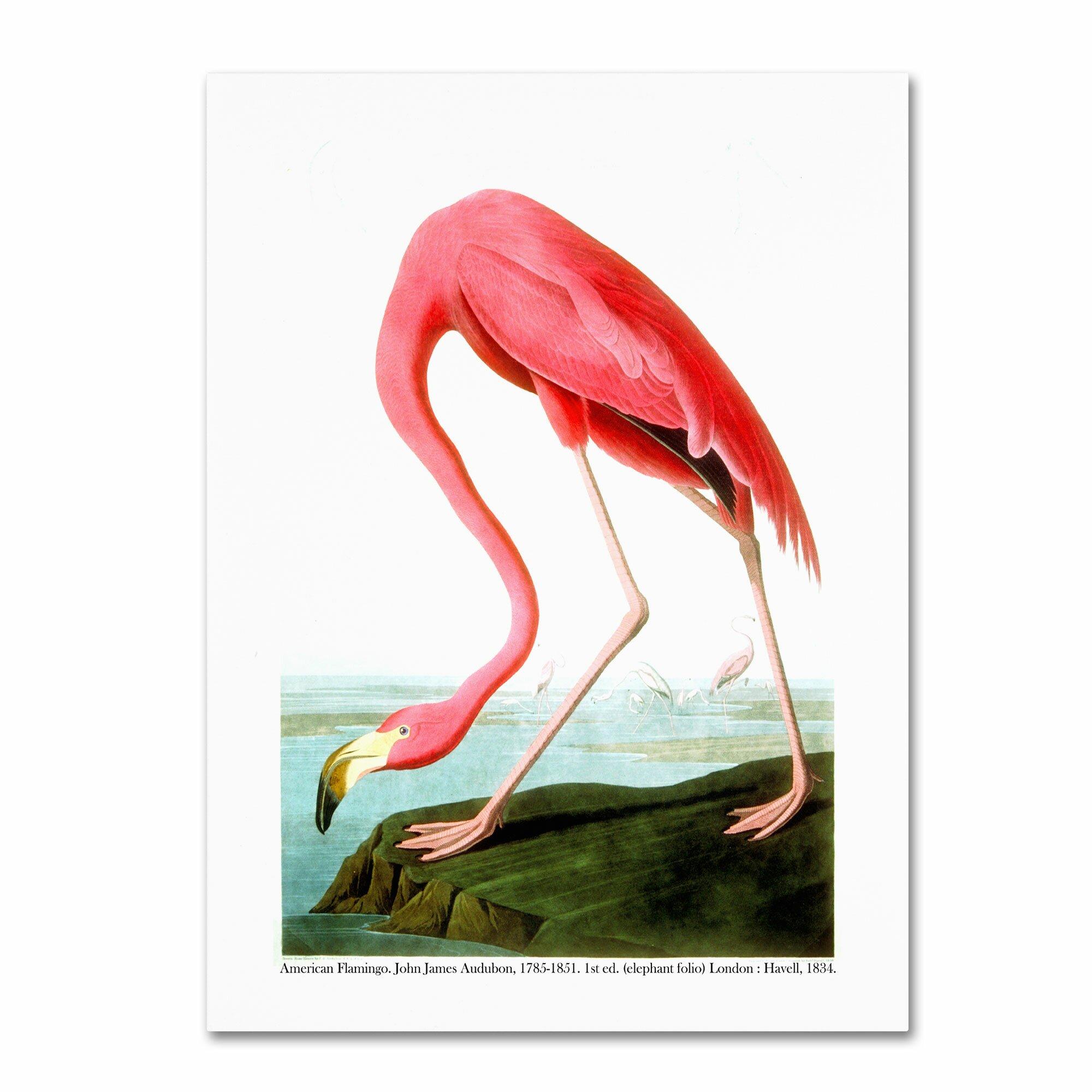 American flamingo painting - photo#9