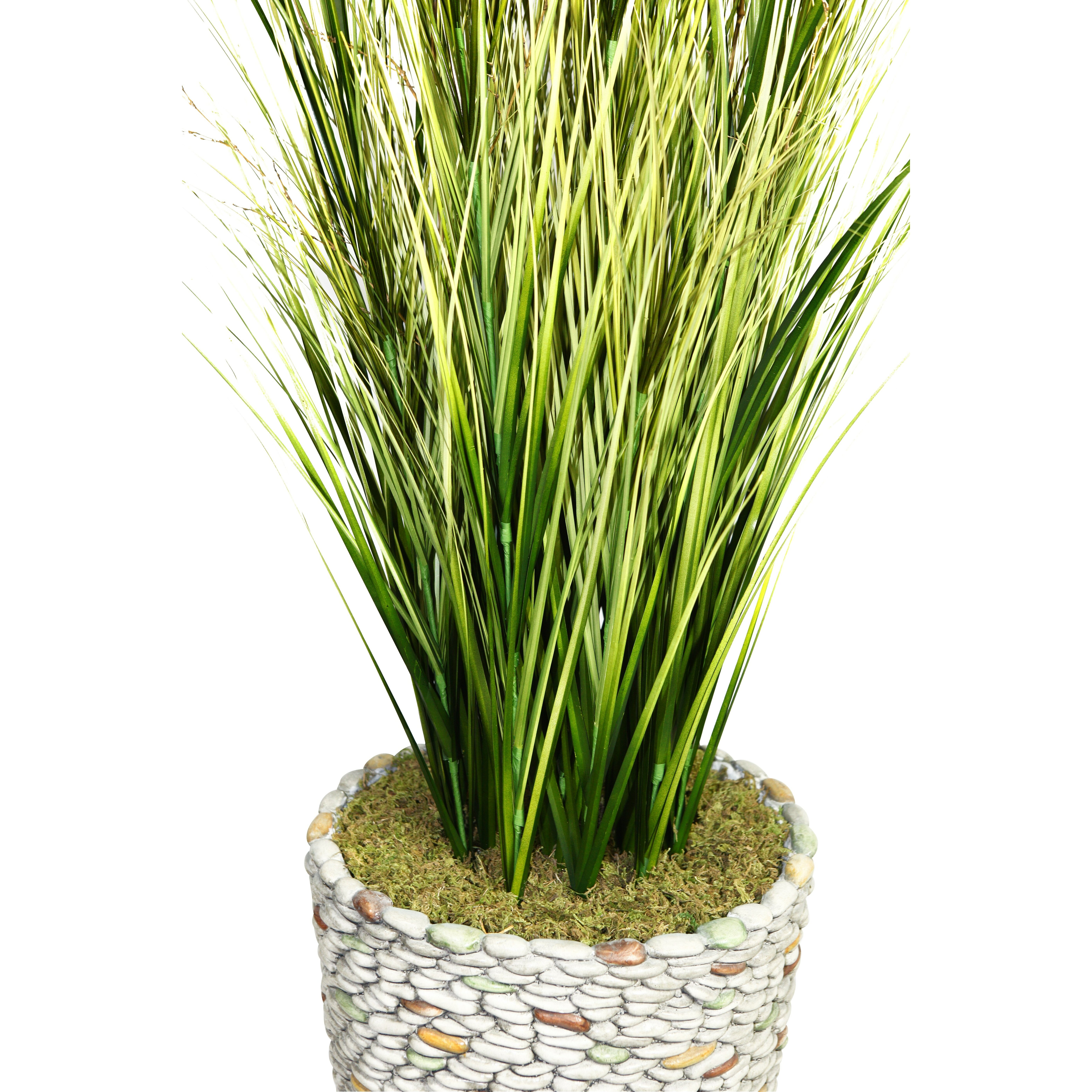 Laura ashley home tall onion grass in round tapered for Tall ornamental grasses for pots