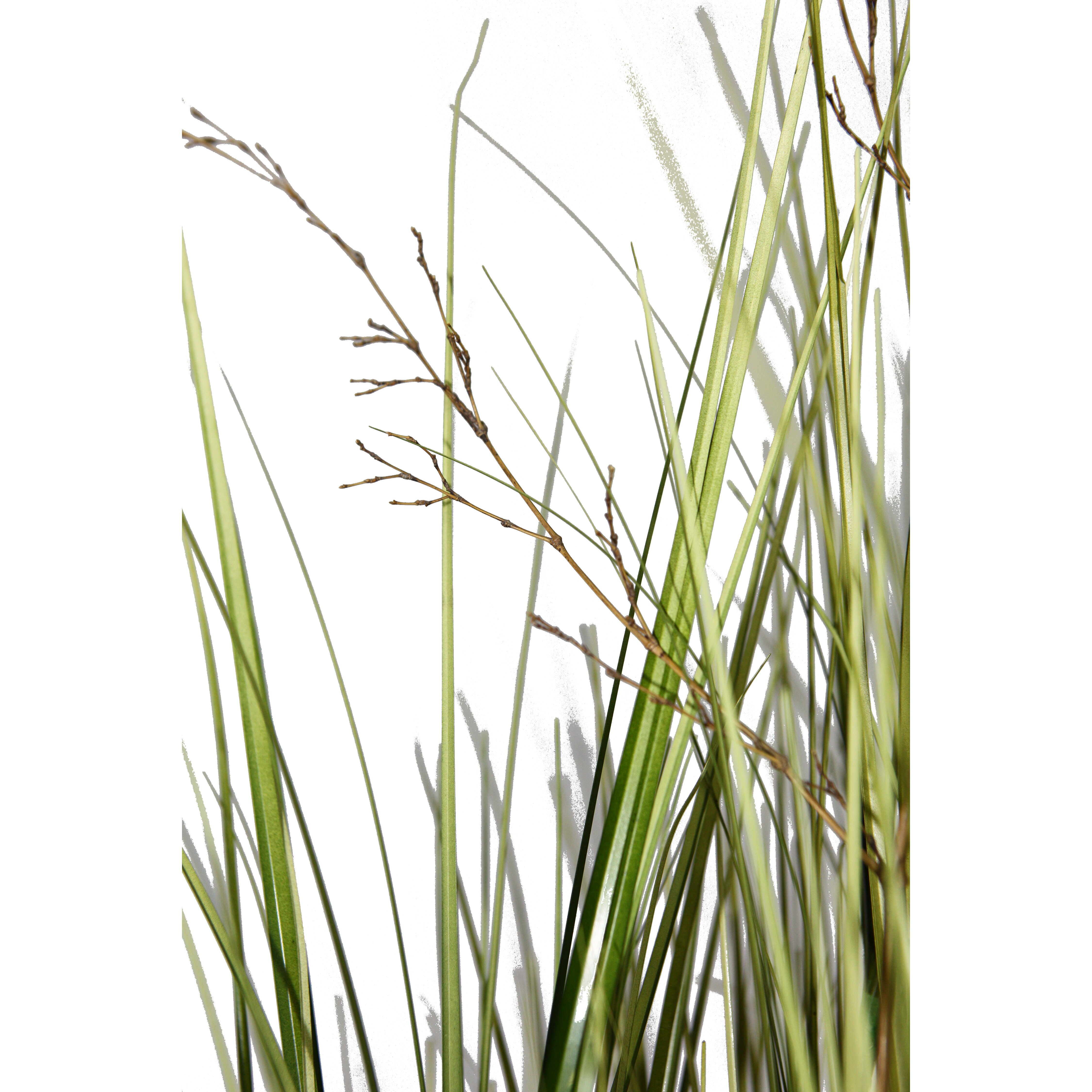 Laura ashley home tall onion grass in square tapered for Tall grass decor