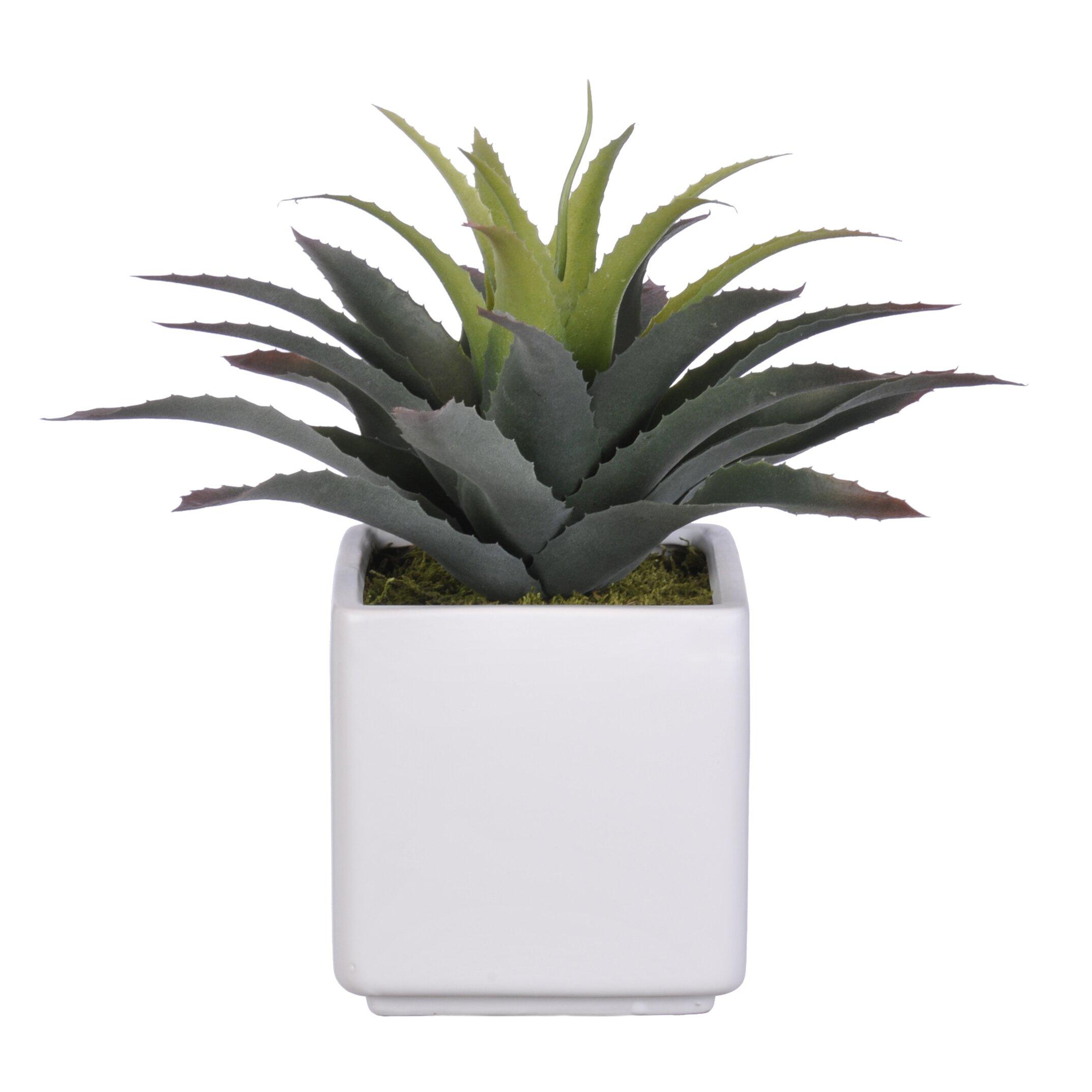 House of Silk Flowers Artificial Star Succulent Desk Top
