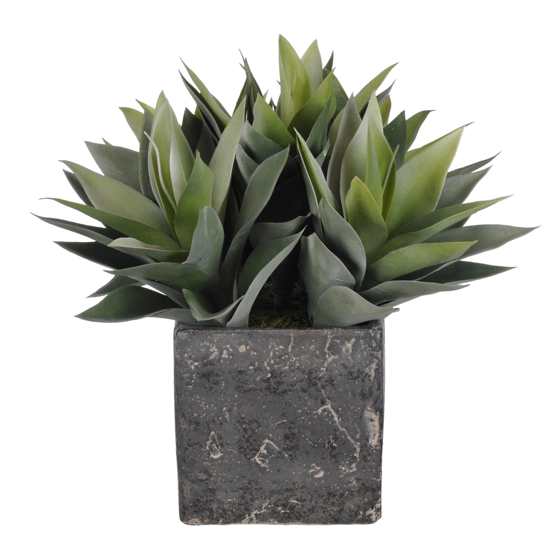 House Of Silk Flowers Artificial Succulents Desk Top Plant