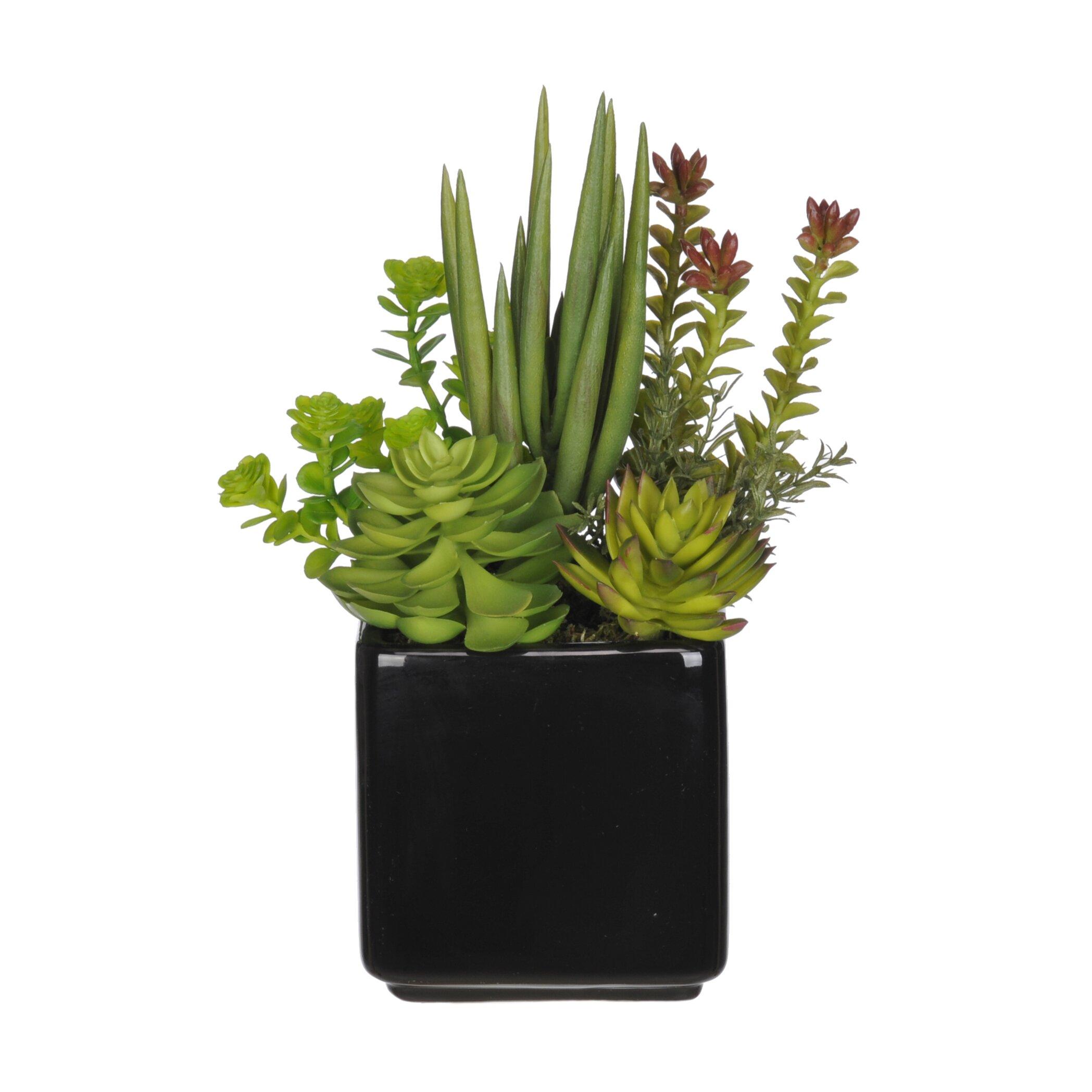 House of silk flowers succulent desk top plant in pot reviews wayfair - Flowering succulent house plants ...