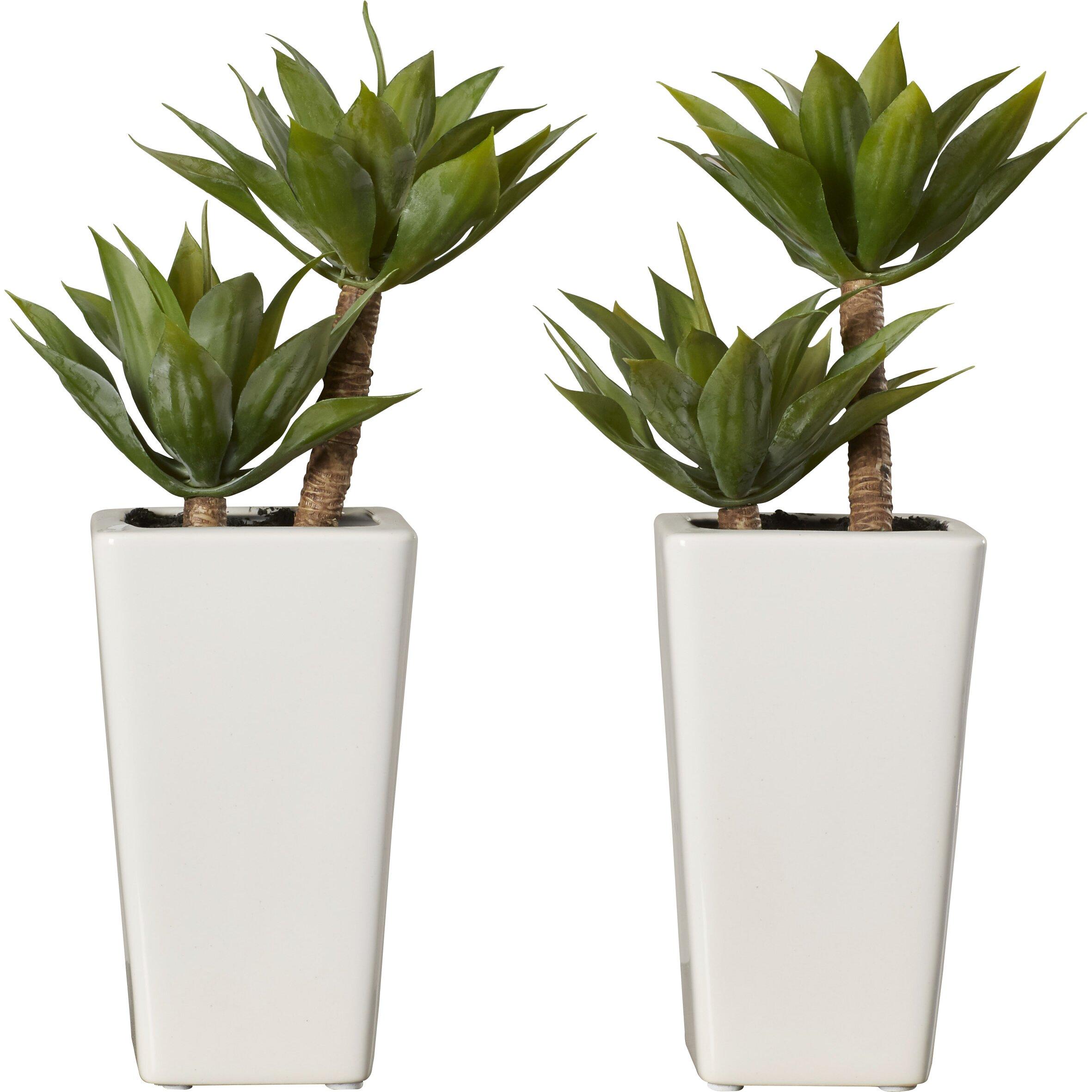 Mercury Row Mini Agave Desk Top Plant In Planter Reviews