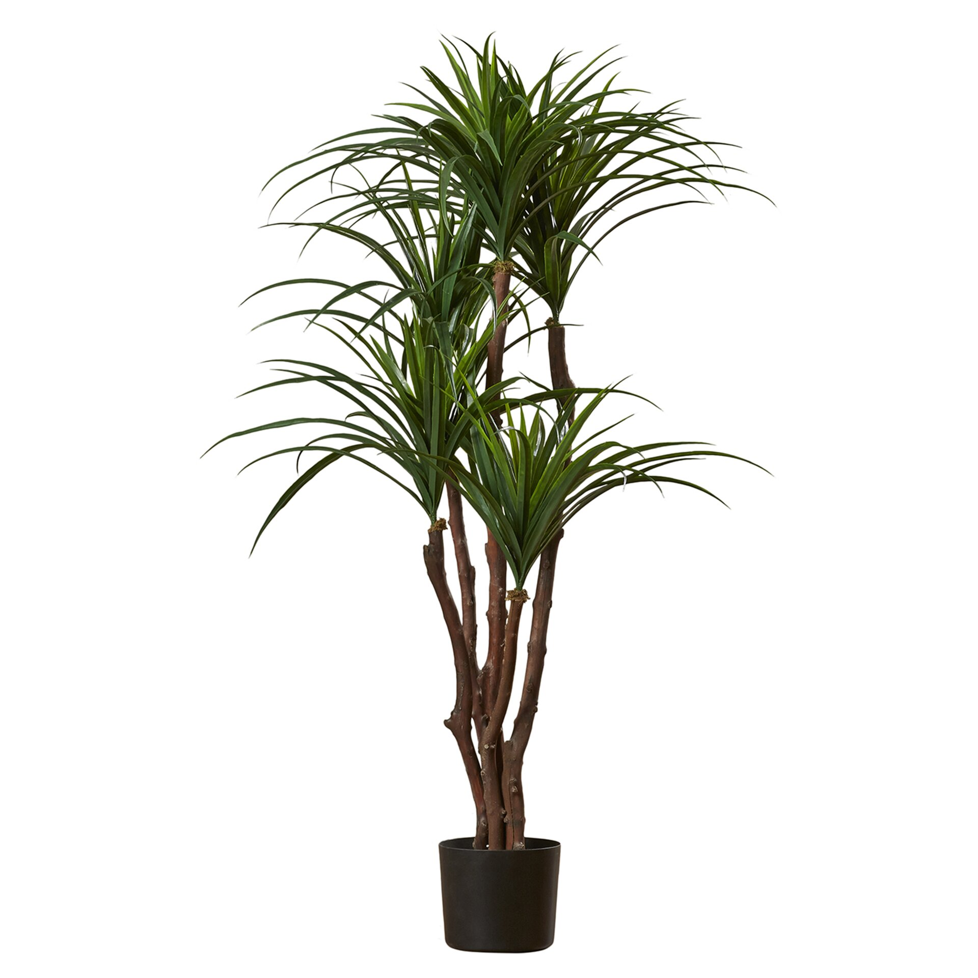 romano tropical yucca tree in pot reviews wayfair. Black Bedroom Furniture Sets. Home Design Ideas
