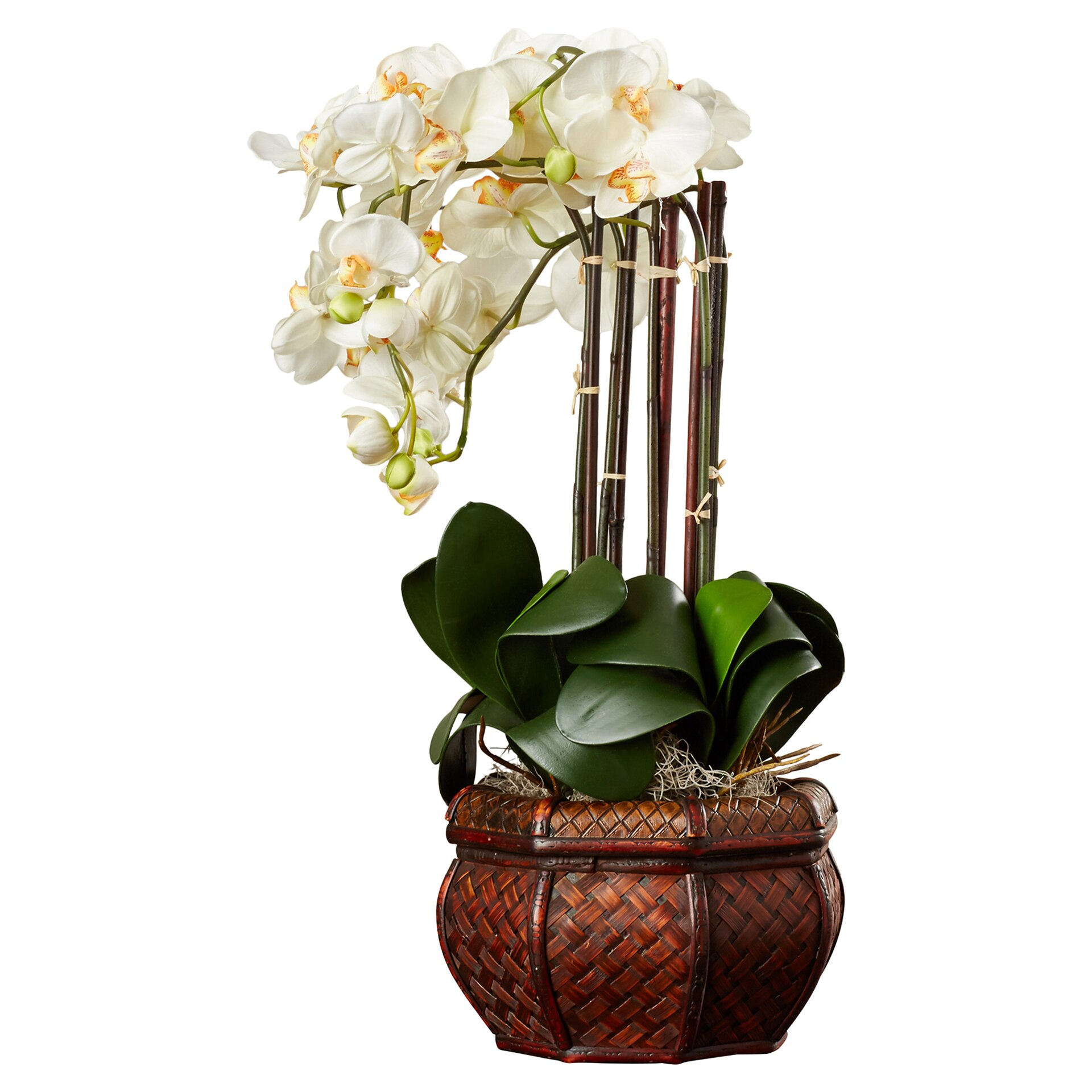 House of Hampton Lorelei Phalaenopsis Silk Flower Arrangement in Decorative Vase & Reviews