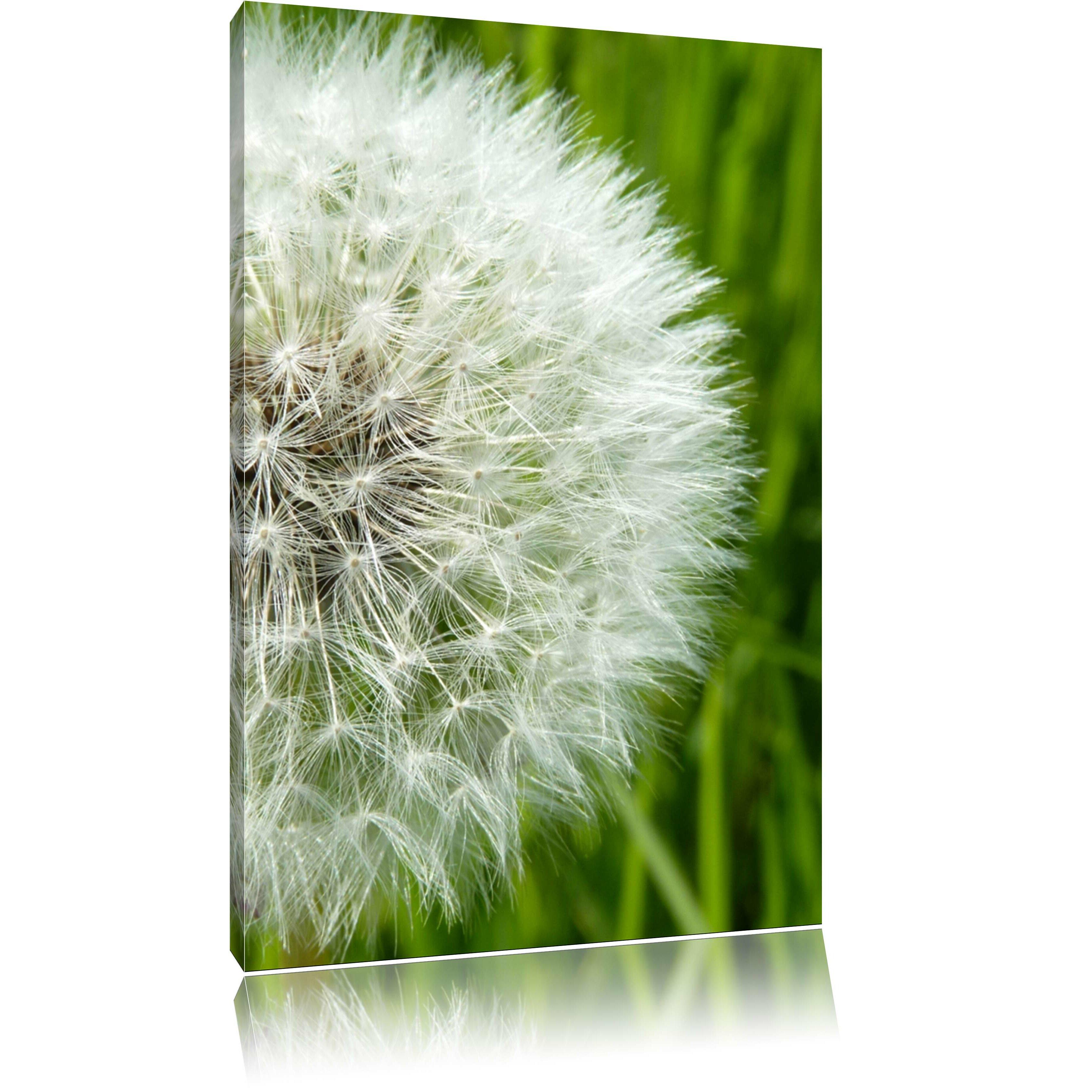 Pixxprint leinwandbild runde pusteblume von manufacturer for Runde kindertische