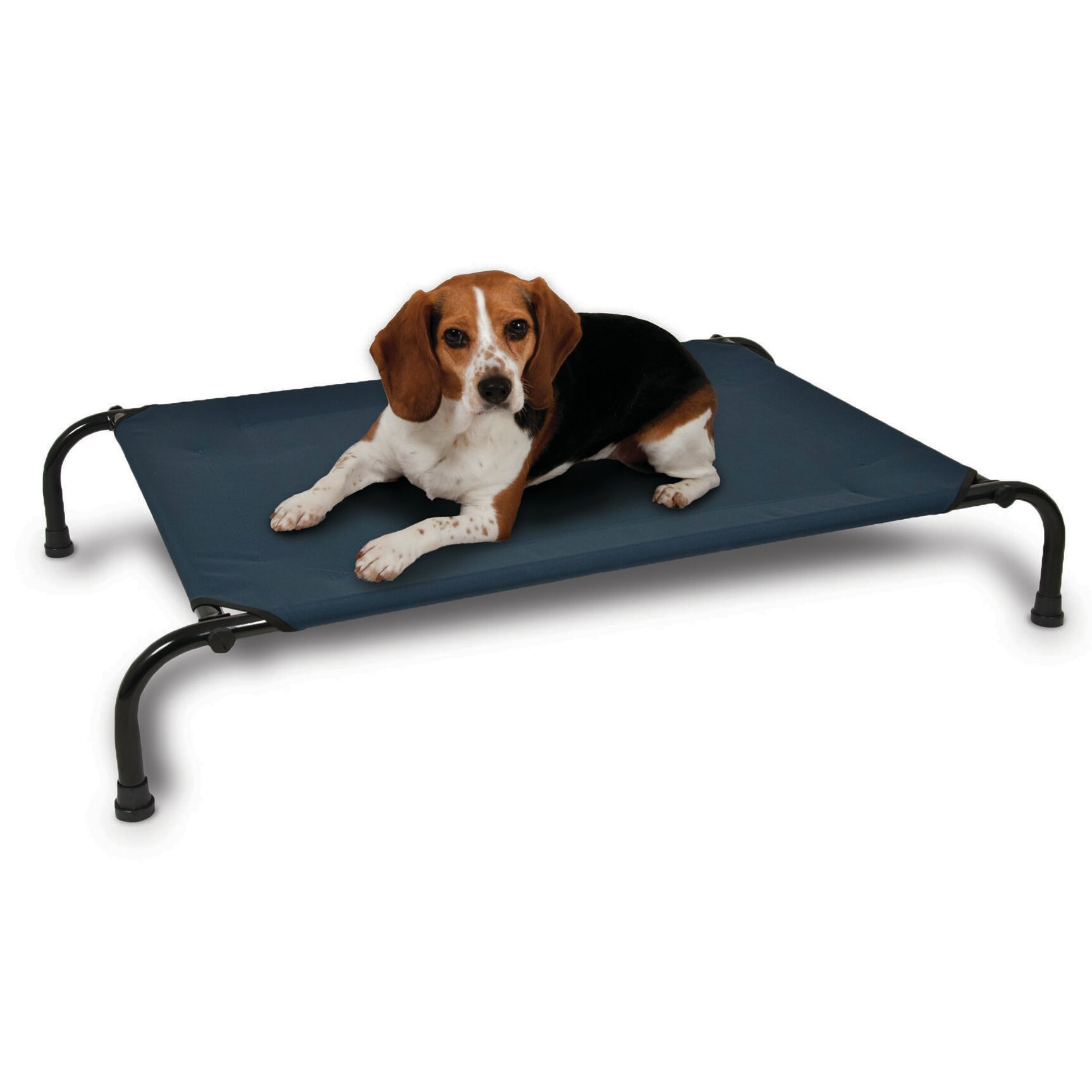 Aspen Pet Elevated Dog Bed